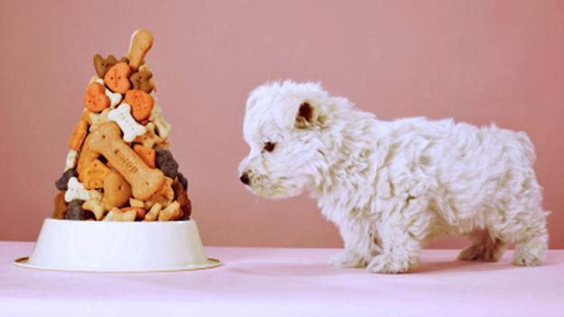 Chemically enhanced pet food