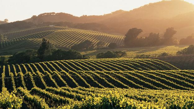 Napa at sunset (Credit: Andrew Gunners/Getty)