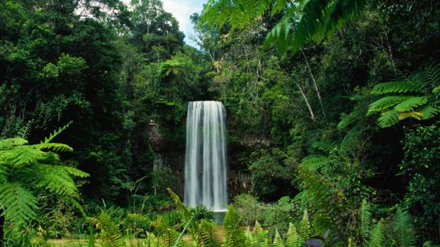 Millaa Millaa Falls (Credit: Richard I'Anson/Getty)