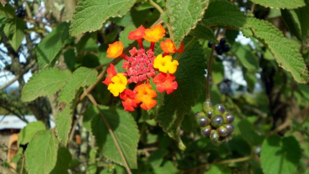 Wildflowers and berries grow side by side (Credit: Amy Mulcair)