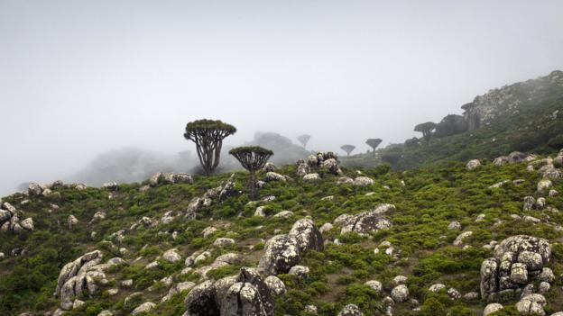 Misty landscapes in Skand (Credit: Juan Herrero)