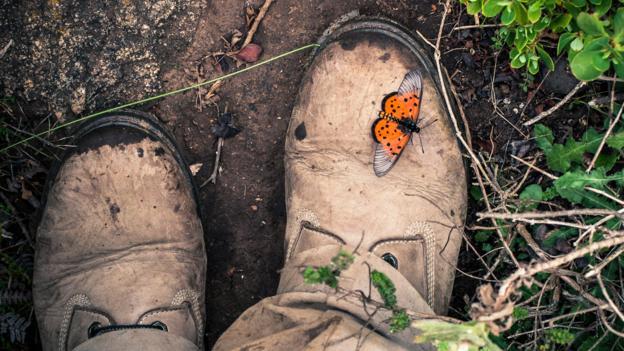 Abundant wildlife (Credit: Juan Herrero)