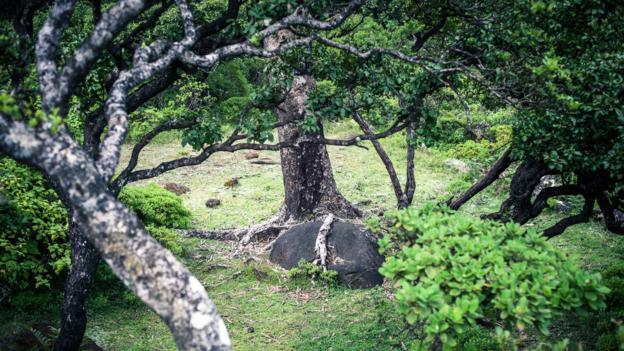 Haghier Mountain forests (Credit: Juan Herrero)