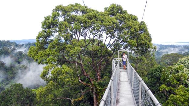 Ulu Temburong National Park (Credit: Andy Jarosz)