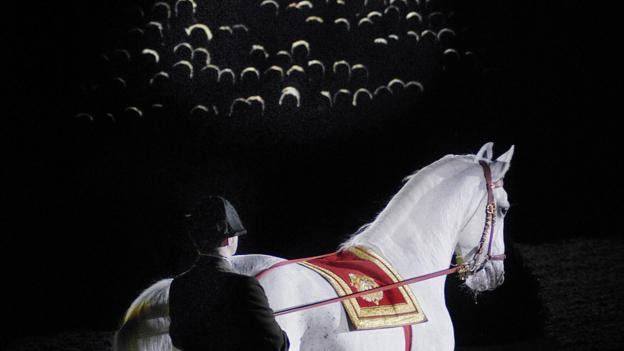The Spanish Riding School (Credit: Jeroen Horsthuis/AFP/Getty)