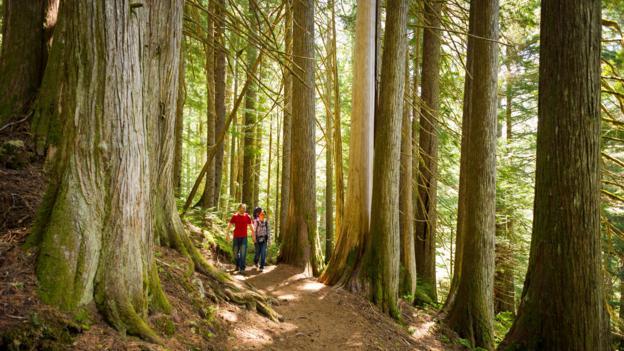 Summer hiking (Credit: Tourism Whistler/Mike Crane)