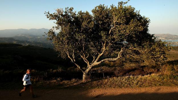 Marin Headlands (Credit: Ezra Shaw/Getty)