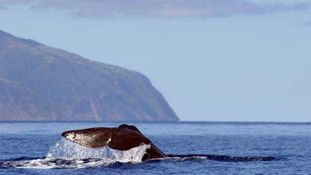 Whale watching (Credit: visitazores.com)