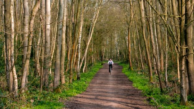 Surrey forest tracks (Credit: Charles Bowman/Getty)