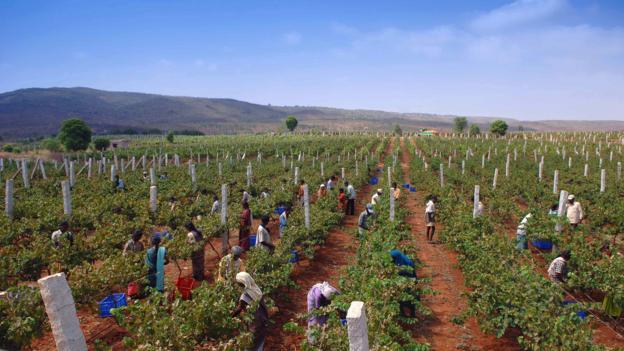 Grover Vineyards