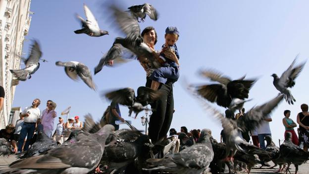 Pigeons in San Marco Square (Credit: Carlo Allegri/Getty)