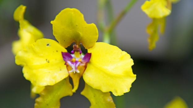 Ecuador has more than 4,000 species of orchid (Credit: Andrew Bain)
