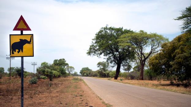 A road sign warns of elephant crossings (Credit: Martin Bureau/AFP/Getty)