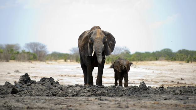 An African elephant and her baby (Credit: Martin Bureau/AFP/Getty)
