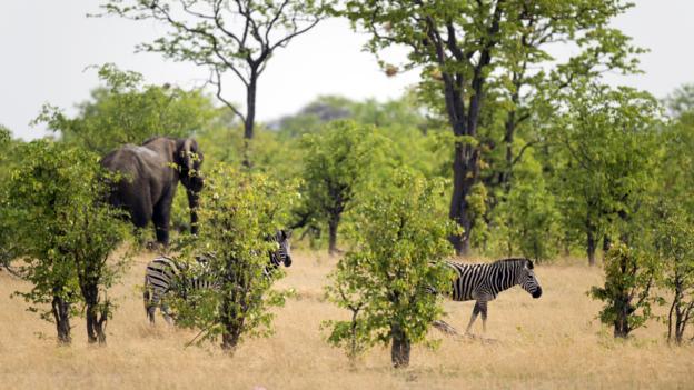 A zebra and an African elephant (Credit: Martin Bureau/AFP/Getty)