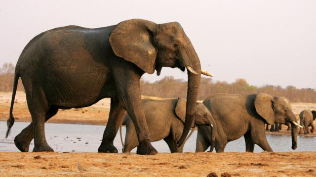 A herd of elephants (Credit: Jekesai Njikizana/AFP/Getty)