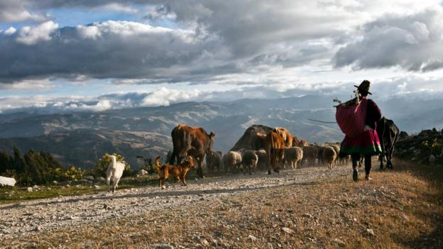 A local shepherd in Huascaran National Park (Credit: Axel Fassio)