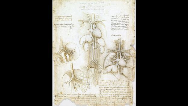 leonardo da vinci research paper Leonardo da vinci research paper leonardo also drew what he observed from the world around him, including the human body, animal and plant life.