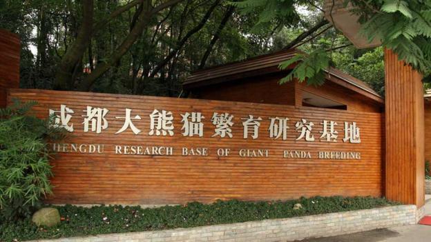 The Research Base of Giant Panda Breeding (Credit: CC Bernt Rostad)