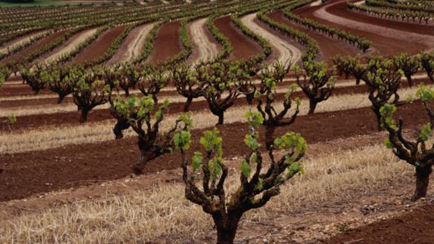 The Barossa Valley, Australia's oldest wine district (Credit: Diana Mayfield/Getty)
