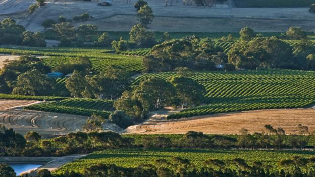 Vineyards and rolling farm country in the Barossa Valley (Credit: Bob Stefko/Getty)