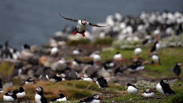Taking flight (Credit: Jeff J Mitchell/Getty)