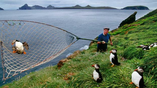 A puffin catcher on Vestmannaeyjar Island (Credit: Frans Lanting/Getty)