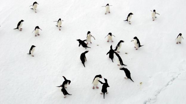 Penguin excursions (Credit: White Desert)