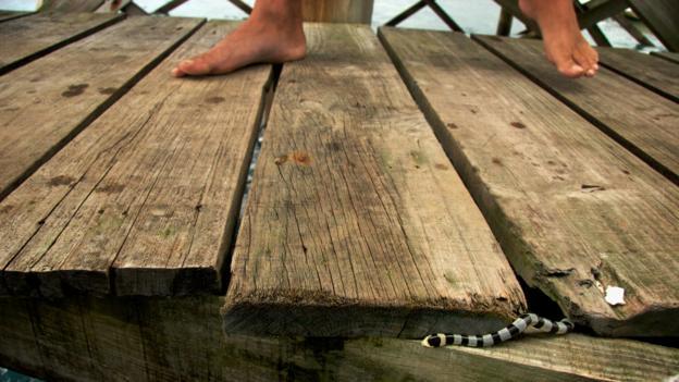Surprise underfoot (Credit: Megan Snedden)