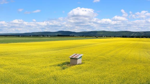 Fields near Kamouraska (Credit: Graeme Green)