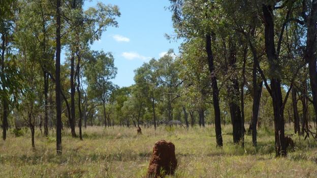 Wombat country (Credit: Georgina Kenyon)