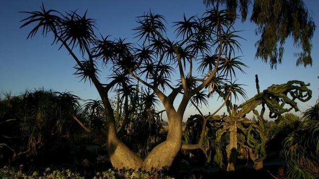 The Desert Garden at Balboa Park (Credit: Stephen Dunn/Getty)
