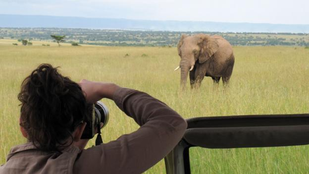 Photographing herds of elephants in the northern Serengeti (Credit: Colleen Clark)