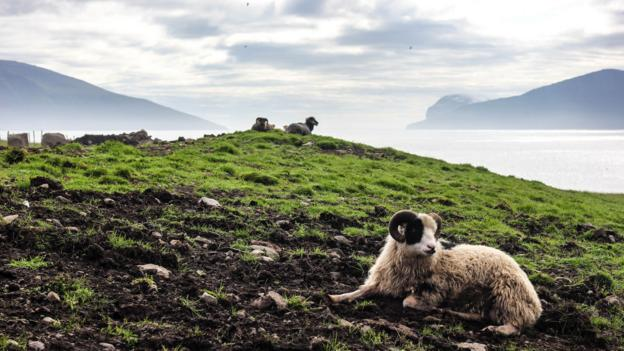 "The name ""Faroe"" translates locally as ""sheep"" (Credit: Gavin Haines)"