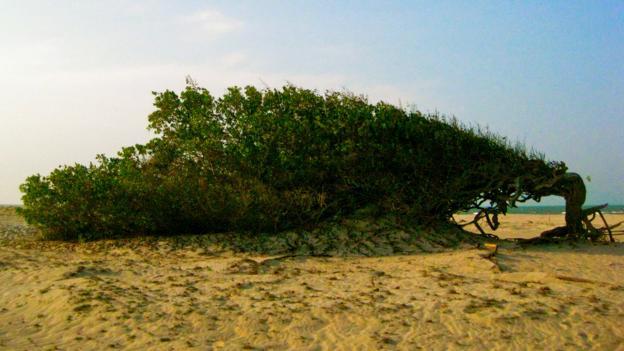 A landscape shaped by wind (Credit: Kiran Herbert)