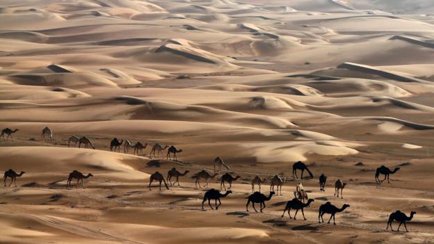 The sand dunes of the Liwa desert, 220km west of Abu Dhabi (Credit: Karim Sahib/AFP/Getty)