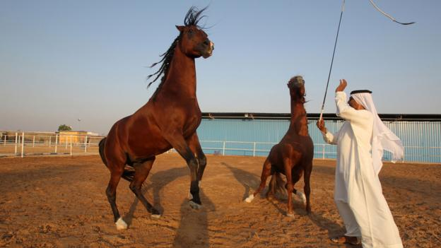 An Emirati horse trainer works with his horses in Abu Dhabi (Credit: Karim Sahib/AFP/Getty)