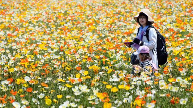 Showa Memorial Park in Tokyo (Credit: Toru Yamanaka/AFP/Getty)