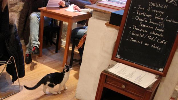 Le Café des Chats, Paris (Credit: Kim Laidlaw)