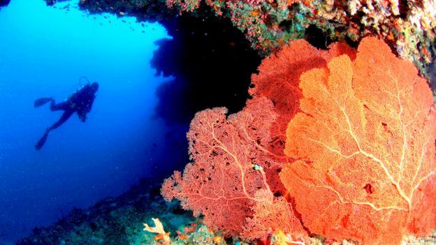 An underwater mecca