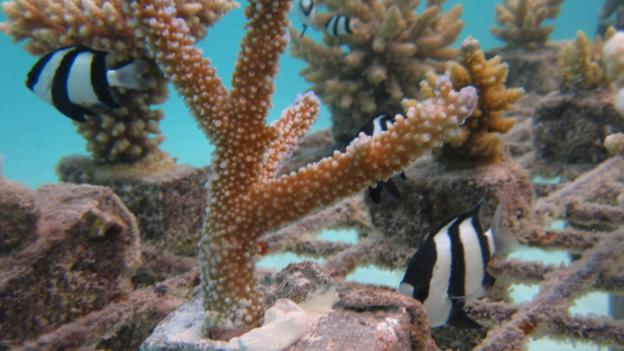 Coral adoption programme