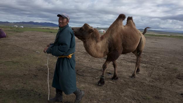 Camel herding (Credit: Tatyana Leonov)