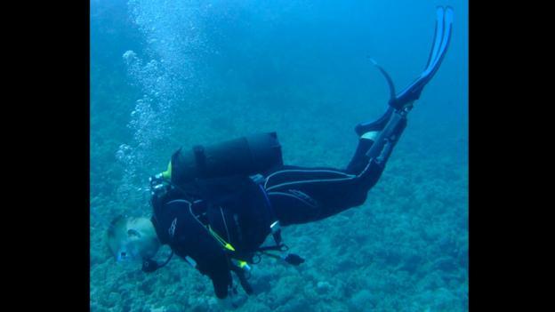 Dive, dive, dive (Credit: Pace Rehabilitation)