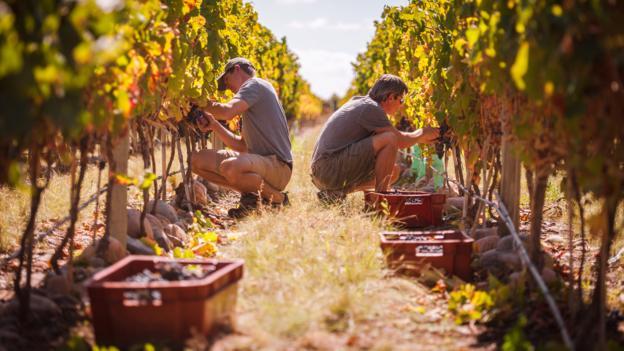 Harvest season (Credit: Michael Evans)