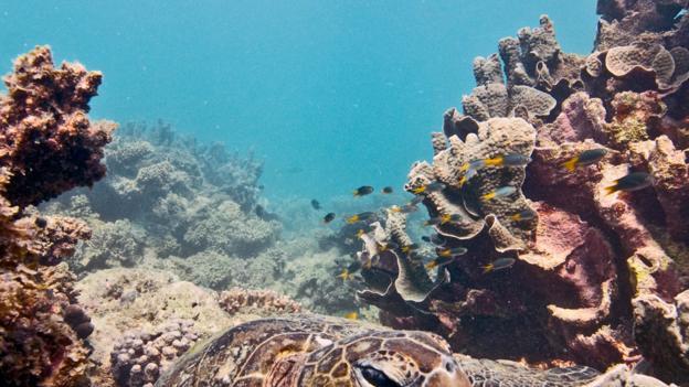 Snorkeling and sea turtles in Ningaloo (Credit: Ant Warner)