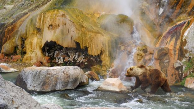 Where brown bears play in peace. (Igor Shpilenok) (Credit: Igor Shpilenok)