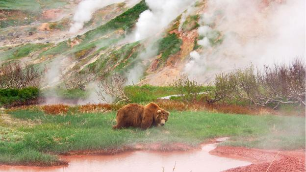 Kronotsky steam bath for bears (Credit: Igor Shpilenok)