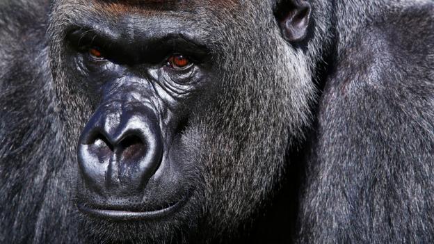 Jungle dweller (Credit: Oli Scarff/Getty)