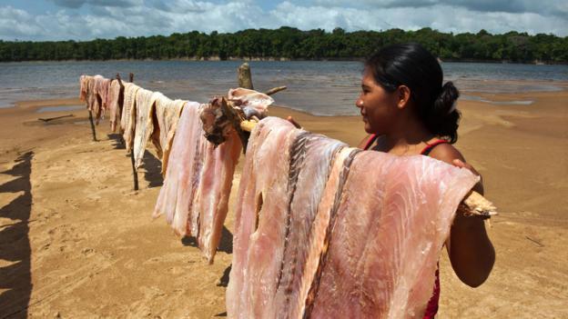 Arapaima in Rupununi, Guyana (Credit: Danita Delimont/Getty)