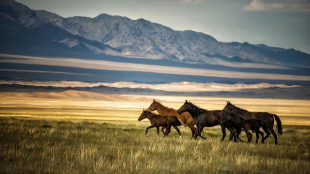 A herd of wild horses in Kazakhstan (Credit: Nutexzles/Getty)